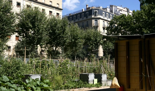 Oriol Campuzano – Horts Urbans